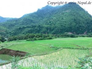 Nepal Geographie - Reisterrassen im grünen Midland von Nepal.