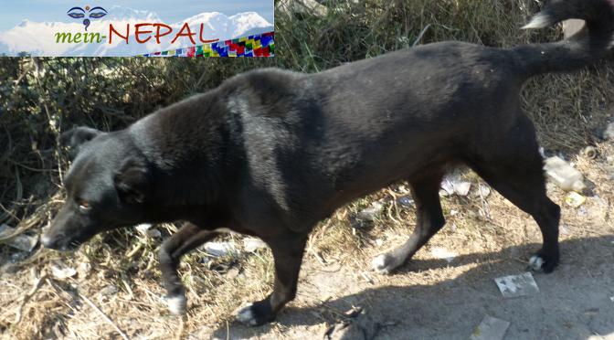 Reiseberichte - Erfahrungen Straßenhunde Nepal